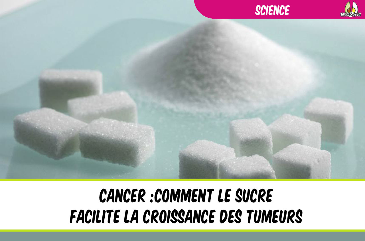 cancer : comment le sucre facilite la croissance des tumeurs