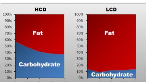 La Céto-Adaptation ou comment l'utilisation des lipides comme carburant peut remplacer les glucides