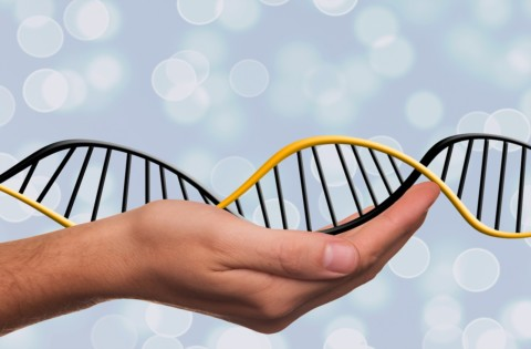 2.10Génétique et épigénétique