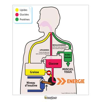 eatfat2befit-infographie-bruleur-de-sucre-1-0