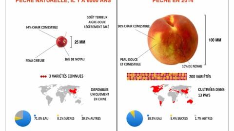 1.5Contexte historique : du Paléolithique à l'agriculture moderne