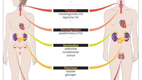 2.5Mes hormones