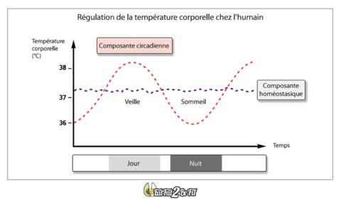 2.6La chronobiologie